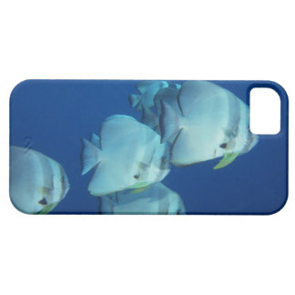 School of Fish 5 iPhone 5 Covers