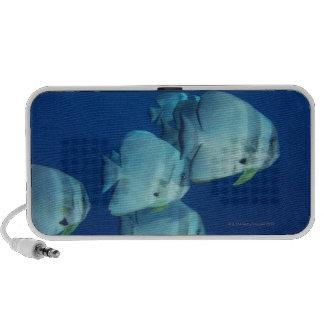 School of Fish 5 iPhone Speaker