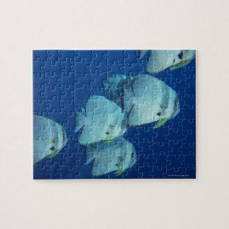 School of Fish 5 Jigsaw Puzzle