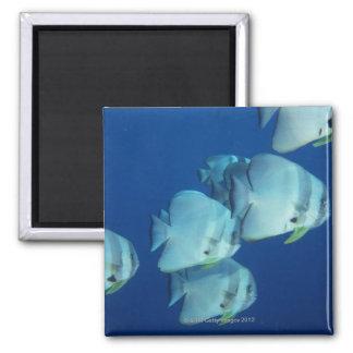 School of Fish 5 Magnets