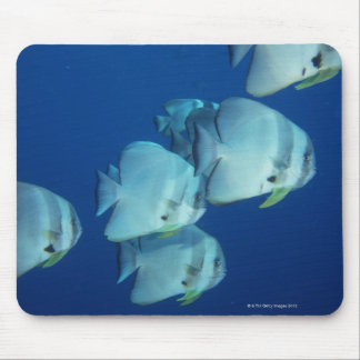 School of Fish 5 Mouse Pad