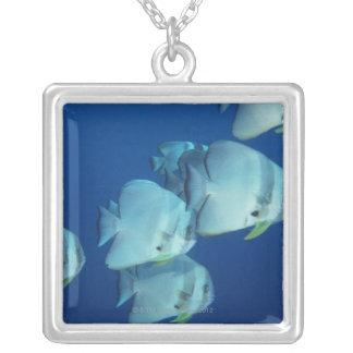 School of Fish 5 Necklaces