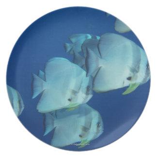 School of Fish 5 Plate