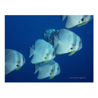 School of Fish 5 Postcard