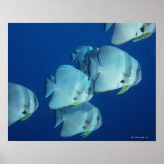 School of Fish 5 Posters