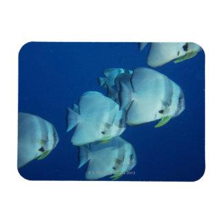 School of Fish 5 Rectangular Magnet