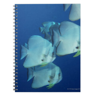 School of Fish 5 Spiral Note Books