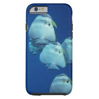 School of Fish 5 Tough iPhone 6 Case