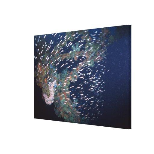 School of Fish 6 Canvas Prints
