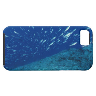 School of Fish 6 iPhone SE/5/5s Case