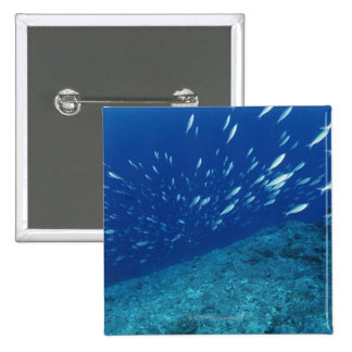 School of Fish 6 Pinback Button