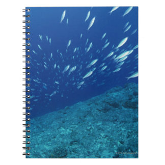 School of Fish 6 Spiral Notebook