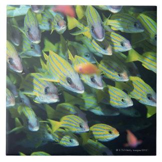 School of Fish 7 Ceramic Tile