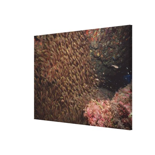 School of Fish 8 Stretched Canvas Prints