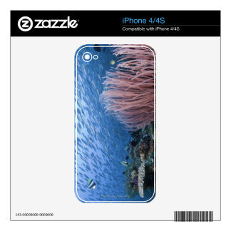 School of fish above reef decal for the iPhone 4