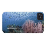 School of fish above reef iPhone 4 Case-Mate case
