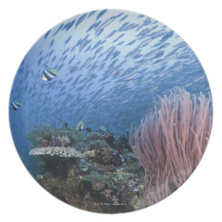 School of fish above reef plate