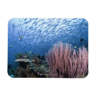 School of fish above reef rectangular photo magnet