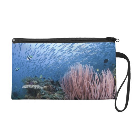School of fish above reef wristlet clutches