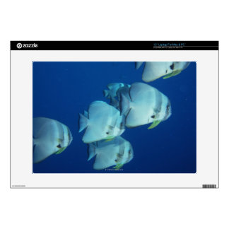 """School of Fish Decals For 15"""" Laptops"""