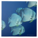 School of Fish Large Square Tile