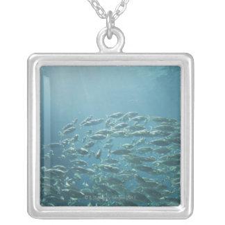 School of fish, Nassau, Bahamas Pendants