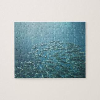 School of fish, Nassau, Bahamas Jigsaw Puzzle