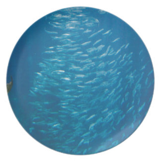 School Of Fish Dinner Plates