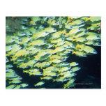 School of Fish Postcards
