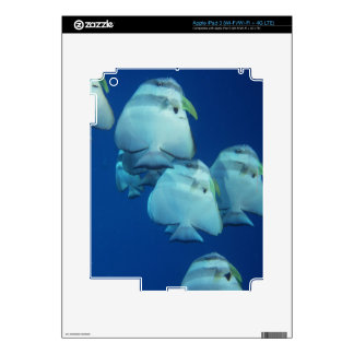 School of Fish Skin For iPad 3