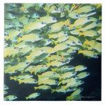 School of Fish Tile