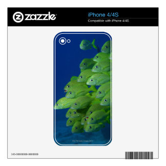School of french bluestriped and margate grunts decals for the iPhone 4S
