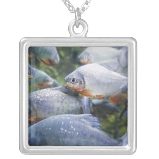 School of Piranhas (Pygocentrus nattereri) Silver Plated Necklace