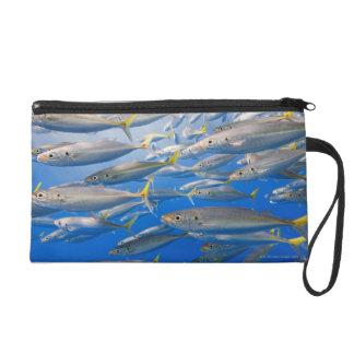 School of Rainbow Runners, Sea of Cortez, Mexico Wristlet Clutch