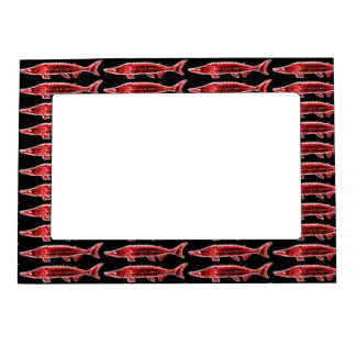 school of red sturgeons magnetic picture frame
