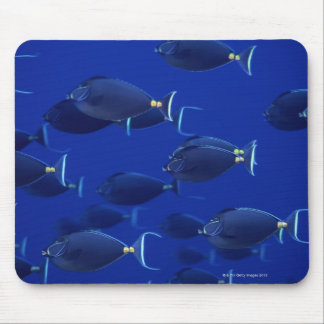 School of smooth-headed unicornfish mouse pad