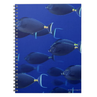 School of smooth-headed unicornfish notebook