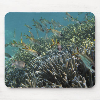 School of Spotfin Squirrelfish Neoniphon Mouse Pad