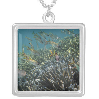 School of Spotfin Squirrelfish Neoniphon Silver Plated Necklace