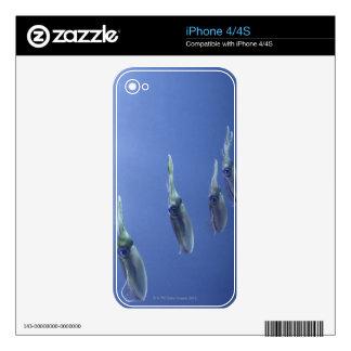 School of squid in the Caribbean iPhone 4 Skins