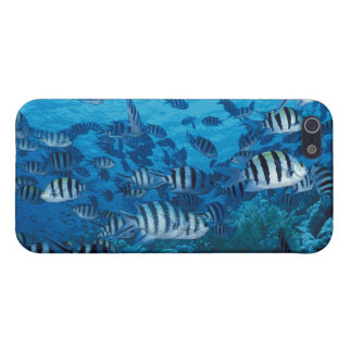 School of Striped Fish Cover For iPhone SE/5/5s
