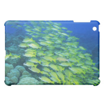 School of swimming bluelined snappers cover for the iPad mini