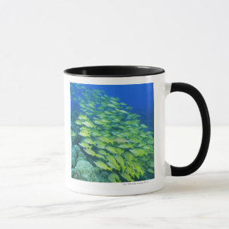 School of swimming bluelined snappers mug