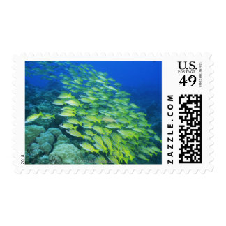School of swimming bluelined snappers postage stamp