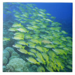 School of swimming bluelined snappers large square tile