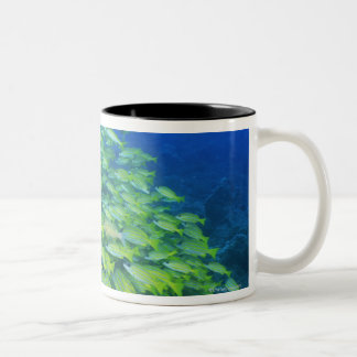 School of swimming bluelined snappers Two-Tone coffee mug