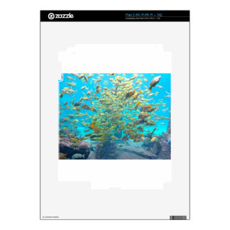School of Tropical Fish Decals For The iPad 2