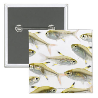 School of X-ray tetra fish (Pristella 2 Inch Square Button