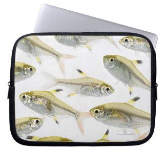 School of X-ray tetra fish (Pristella Computer Sleeve