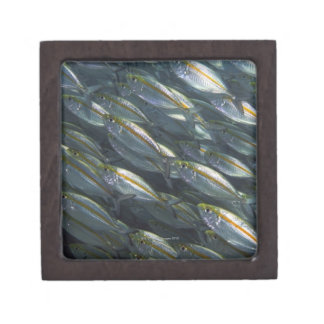 School of Yellow jacks (Carangoides) Keepsake Box
